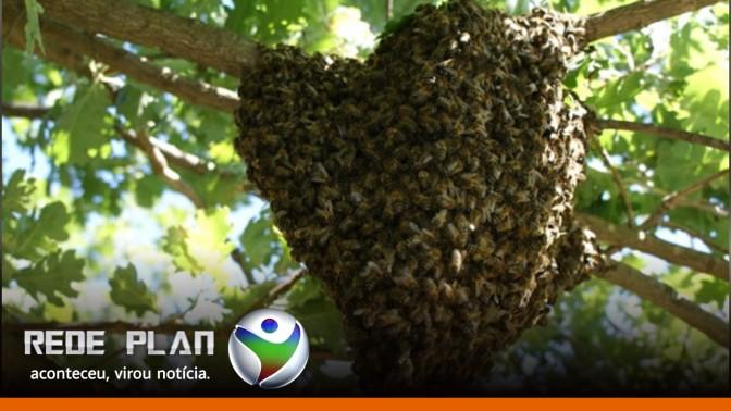 Enxame de abelhas ataca pessoas em clube na Lagoa Formosa, em Planaltina-GO | RP