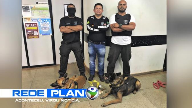Polícia Civil apreende drogas dentro de fogão com ajuda de cães em Plan-GO | RP