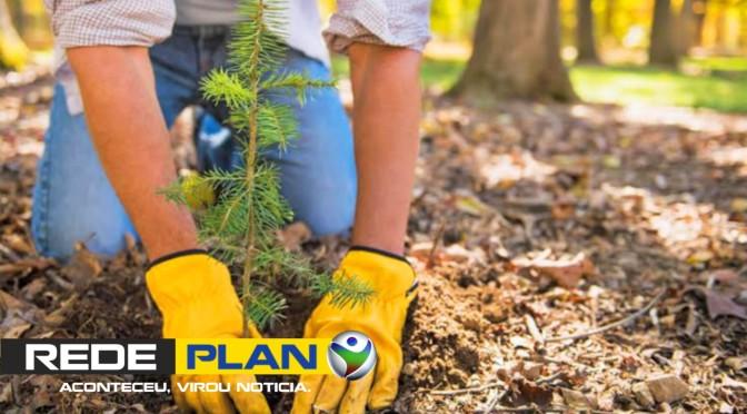 I Plantio global acontece nesse domingo em Planaltina-GO – Venha plantar uma árvore! | RP