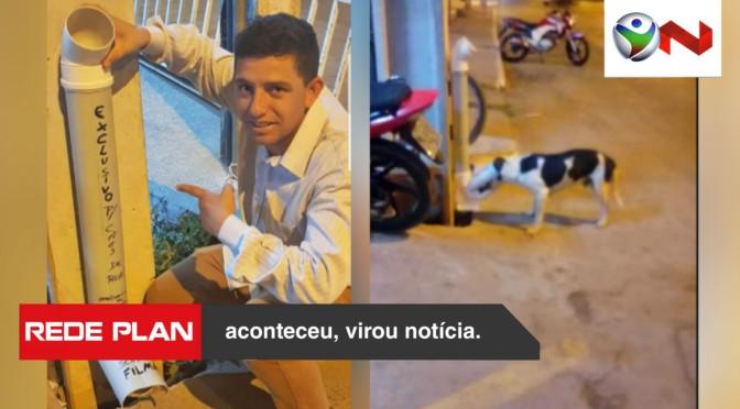 Empresário adere ideia e coloca ração na porta da loja para cães de rua em Planaltina-GO | RP